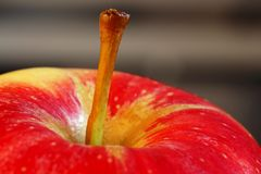 Apple stem Coloseup Royalty Free Stock Image