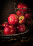Apple Still Life. A still life of apples in the Old World Masters style royalty free stock photos
