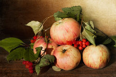 Apple still life. Some ripe apples and viburnum berries on a beautiful background Royalty Free Stock Images