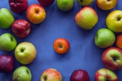 Apple su fondo blu Fotografia Stock