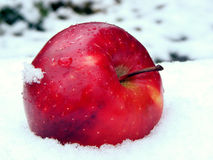 Apple su neve Fotografie Stock