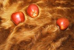 Apple su pelliccia Fotografia Stock