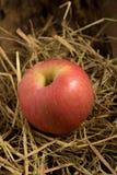 Apple sugrör På trä Royaltyfri Bild