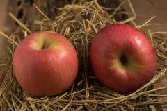 Apple sugrör På trä Arkivbild