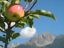 Apple sull'albero con la direzione delle montagne italiane Immagini Stock