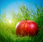 Apple sur l'herbe photos stock