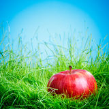 Apple sur l'herbe photographie stock