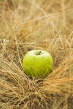 Apple sur l'herbe jaune Image libre de droits