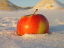 Apple sur la neige Images stock