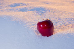 Apple sur la neige Photo libre de droits