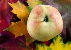 Apple sur les feuilles d'automne photos libres de droits