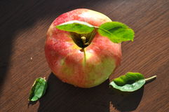 Apple on the table Royalty Free Stock Photography