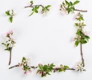 Apple-takjes in bloei Boven mening Royalty-vrije Stock Foto's