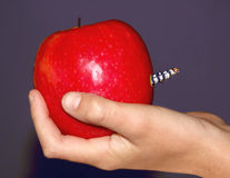 Apple for the teacher?. Apple for the teacher but not the expected Royalty Free Stock Images