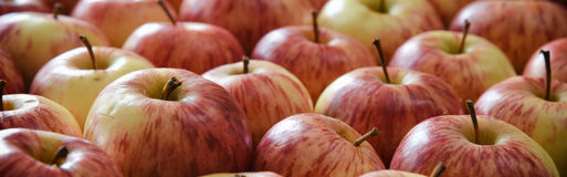 Apple texture horizontal banner Royalty Free Stock Photos