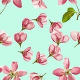 Apple Texture sans couture de modèle des fleurs Fond floral, p Image stock