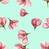 Apple Texture sans couture de modèle des fleurs Fond floral, p Images stock