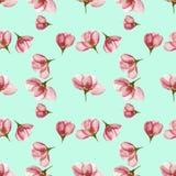 Apple Texture sans couture de modèle des fleurs Fond floral, p Photos stock
