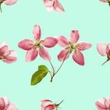 Apple Texture sans couture de modèle des fleurs Fond floral, p Photos libres de droits
