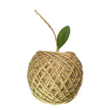 Apple thread Stock Photography