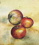 Apple. Three red apple watercolor style Royalty Free Illustration