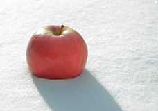 Apple in to snow Stock Image