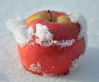 Apple in to snow Royalty Free Stock Photos