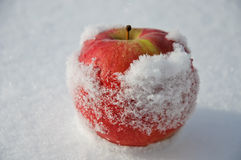 Apple in to snow Stock Photography