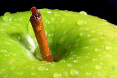 Apple Top. Top of a green apple Stock Photography