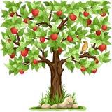 Apple träd Arkivfoto