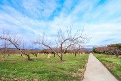 Apple träd i authumn Royaltyfri Foto