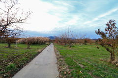 Apple träd i authumn Royaltyfria Bilder