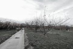 Apple träd i authumn- eller nedgångsäsong Royaltyfri Foto