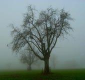 Apple träd i dimman arkivbild