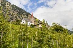 Apple träd i södra tyrol, Italien Arkivbild
