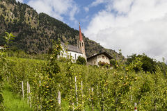 Apple träd i södra tyrol, Italien Arkivfoton