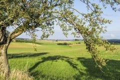 Apple träd i September Royaltyfri Bild