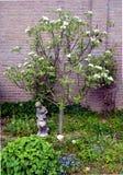 Apple-träd i vår Arkivfoton