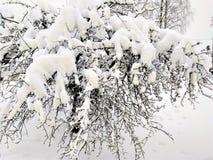 Apple träd i vinter efter ett tungt snöfall royaltyfri foto