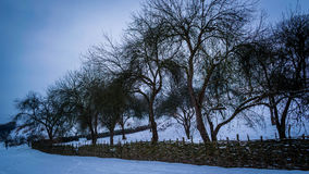 Apple träd inom ett staket Arkivfoto