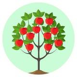 Apple träd med den mogna fruktvektorillustrationen i rund knapp Royaltyfri Fotografi
