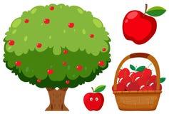 Apple träd och Apple på vit bakgrund Arkivfoton