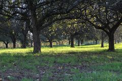 Apple träd på bergträdgården Arkivbild