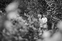 Apple-träd trädgård Royaltyfria Bilder