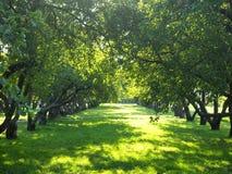 Apple trädgård royaltyfri fotografi
