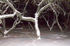 Apple träd i vinternatt under snön Arkivfoto