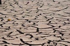 Apple tre στην ξηρά ραγισμένη γη Στοκ Φωτογραφίες