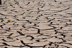 Apple tre on the dry cracked earth. Apple tree and drought earth. Apocalyptic stock photos