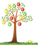 Apple tree. Vector apple tree with fruits Royalty Free Stock Images