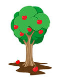Apple tree stock illustration